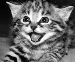 Postmodern philosophical musings of a stray kitten