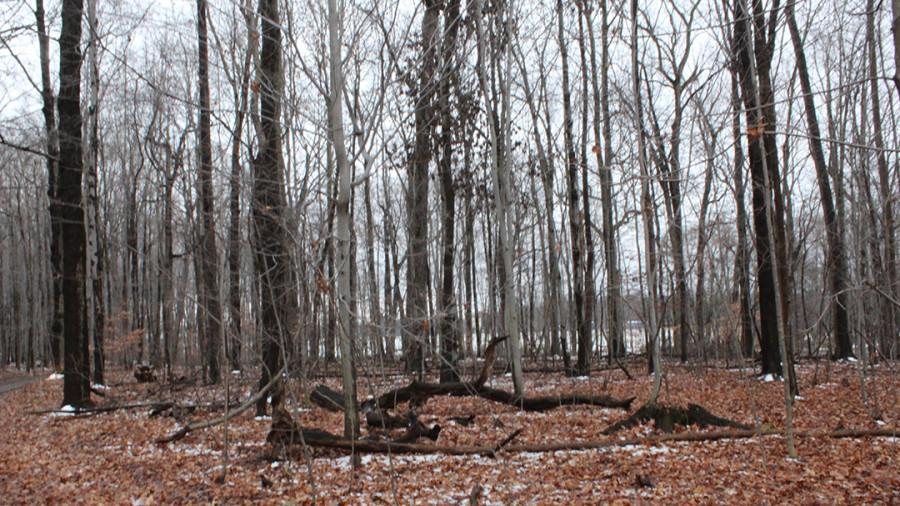 Tree trunks and stumps on the ground after logging efforts in the forest at The Andrew Wells Robertson Athletic and Recreation Complex on Dec. 3, 2015.