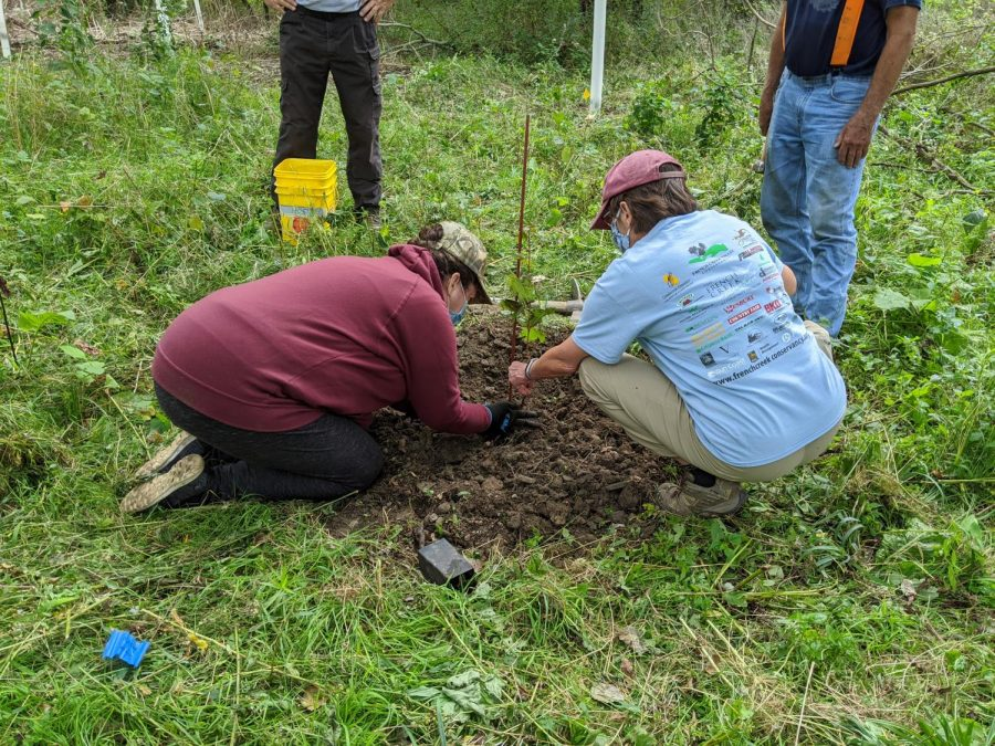 Volunteers help plant a tree as part of the cleanup's stewardship project on Saturday, September 13, 2020