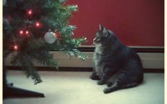 A very plump house cat gazes at a Christmas tree.